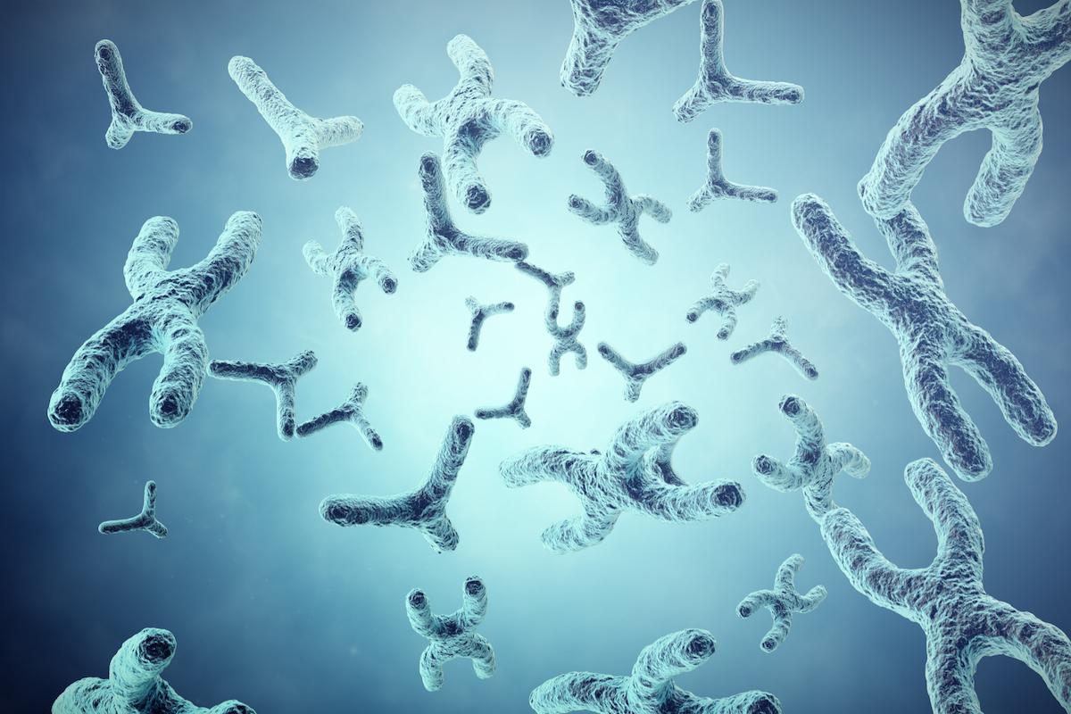 chromosomy w zespole Klinefeltera  XXY